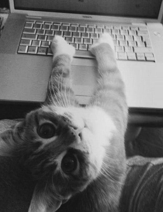 macskamunka.jpg