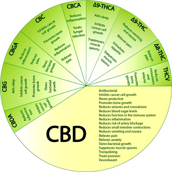 cannabinoid.png