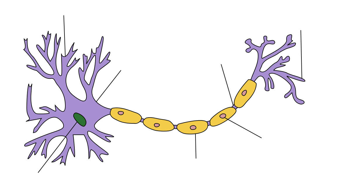 1179px-neuron_hand-tuned_svg.png