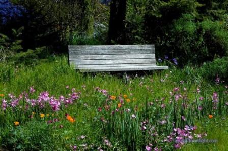 Relax-in-The-Garden-520x346.jpg