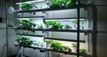 aeroponics2.jpg