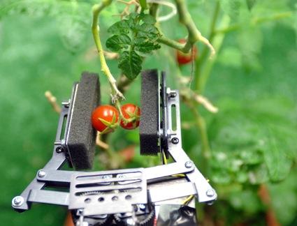 robotic-garden-2.jpg