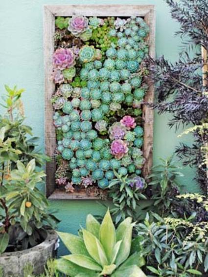Egy keretbe rendezett, döntött cserepekbe ültetett pozsgások is kiadhatnak zöldfal-szerűséget