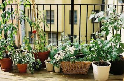 garden tranquility balcony-garden.jpg