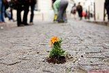 Guerilla-gardening-paris.jpg
