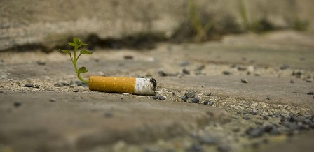 Cigarette-Butts-Are-Transformed-Into-Plants-4-720x350.jpg