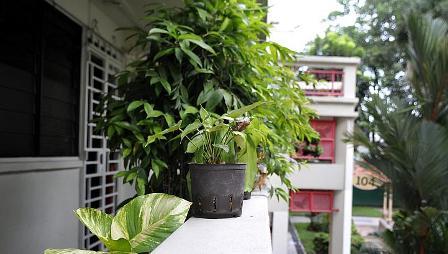 Növény az erkélyen