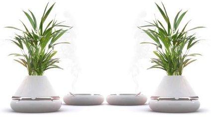 Levegő tisztító növények