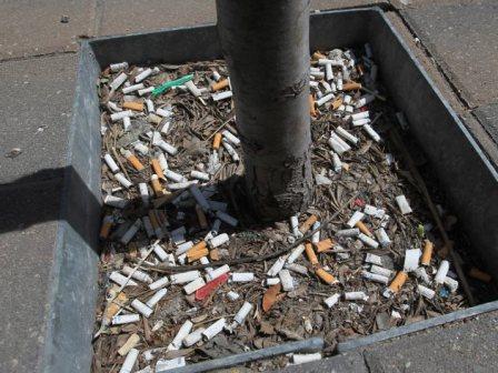 Cigaretta csikk a fa tövében
