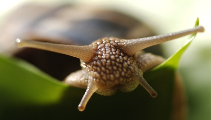 slug2.jpg