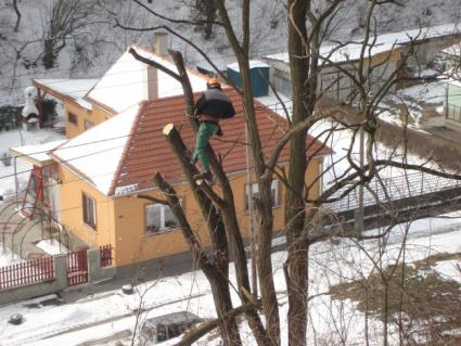 1290166341_139367117_1-Fotok--Fakivagas-Sopron.jpg