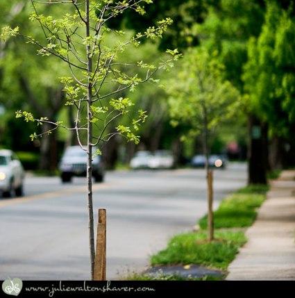 050909-street-1.jpg