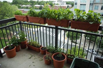 Balcony-Gardening.jpg