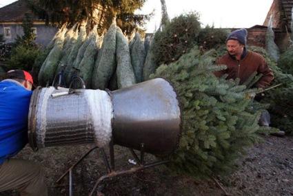 Karácsonyfa kiszállítás országosan!