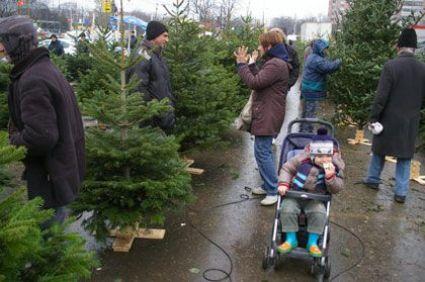 Karácsonyfa webáruház, Megyeri kertészet!