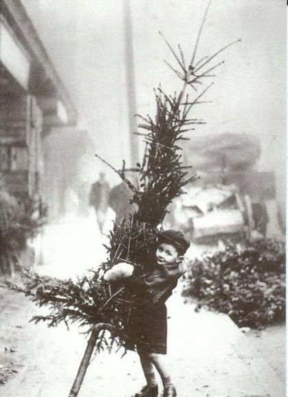 Karácsonyfa érdekességek