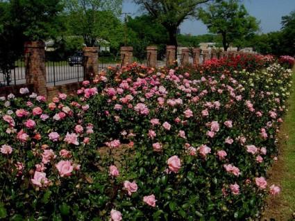 tyler_rose_garden_texas_600x.jpg