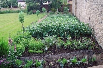 vegetable-gardening.jpg