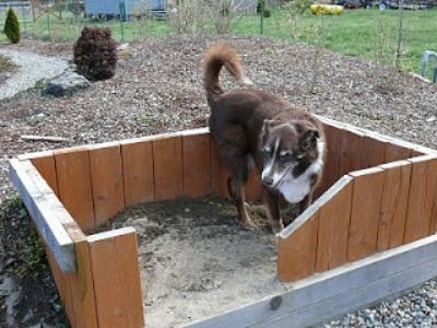 Dog Area in Garden.jpg
