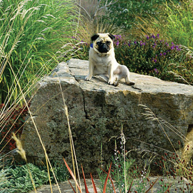 dogscaping-lookout-Thomas-J.-Story-377x377.jpg