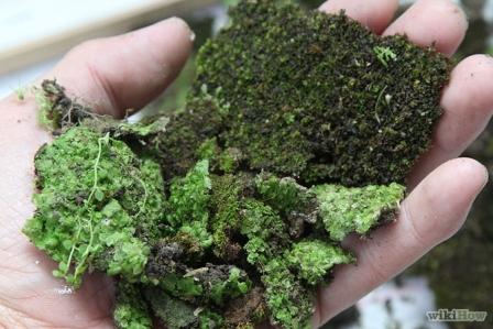 Egy bő maréknyi szép mohát gyűjtsünk be egy kiránduláskor. Ne fáról, hanem kőről szedessünk.