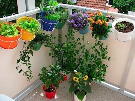 balcony-garden-flowers-decorative-condo.ca_.jpg