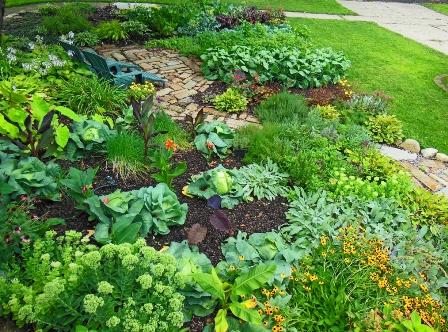 Front-Lawn-Vegetable-Garden-2012-August.jpg