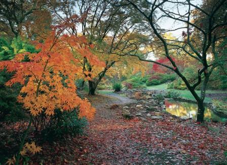 exbury_gardens_autumn_600x.jpg