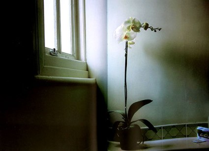 050108_orchidinthebathroom.jpg