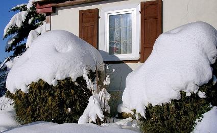 havas tuják_1.jpg