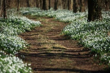 hovirag-arboretum-alcsut.jpg