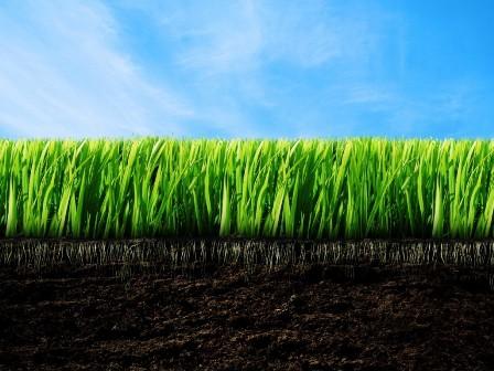nature-plants-green-grass-nice-wallpaper-1024x768.jpg