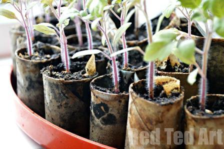 DIY-Seedling-pots.jpg