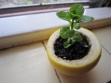 seedlingpot.jpg