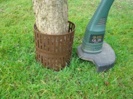 TreeProtect.JPG
