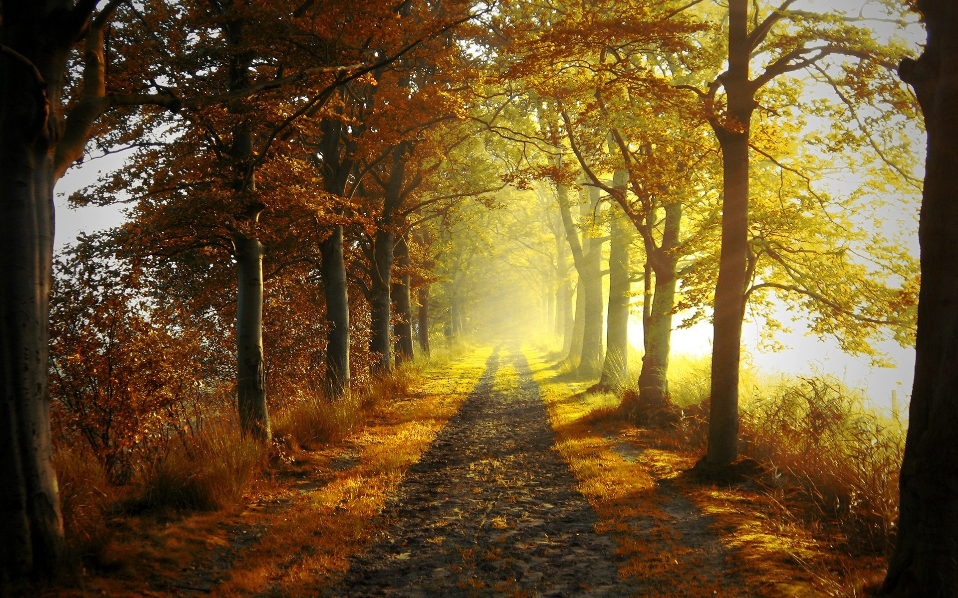 wallpaper-autumn-road-177798.jpg