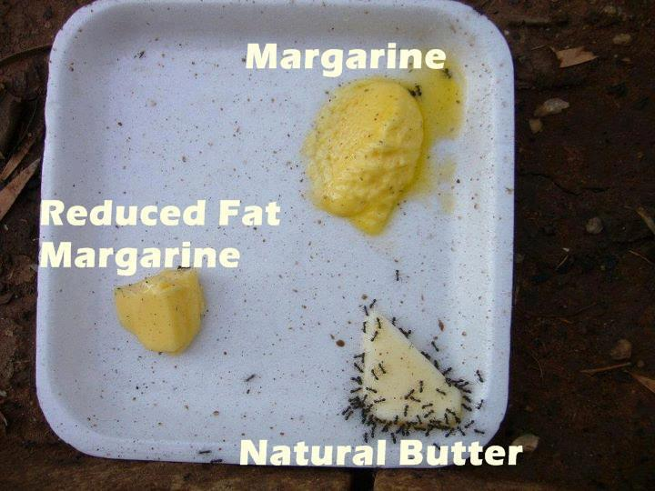 ants-vs-margarine-vs-butter-72011599196.jpeg