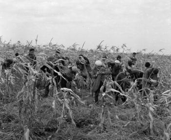 kukoricaszedés.jpg