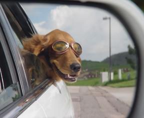 Dog-Car-Ride.jpg