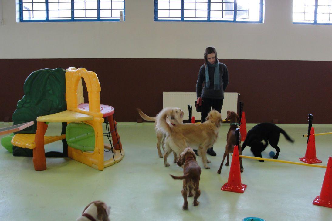 kutya4.jpg