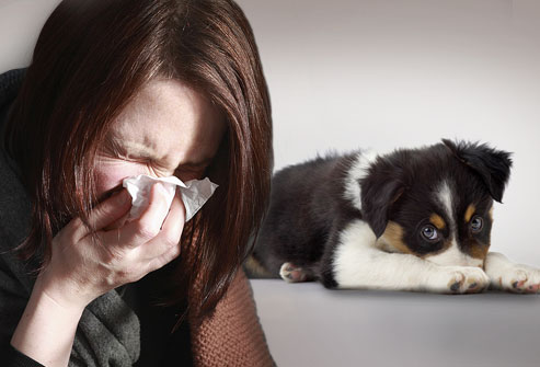 person-sneezing-with-dog.jpeg