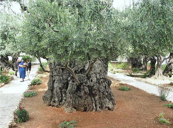 Jerusalem_GardenGetsemane183.jpg