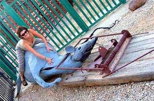 creepy-playgrounds-deadmouse.jpg