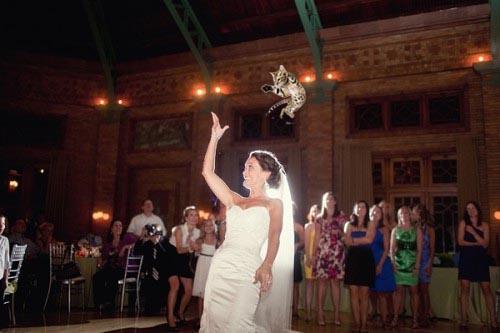 bride-cat-fling1.jpg