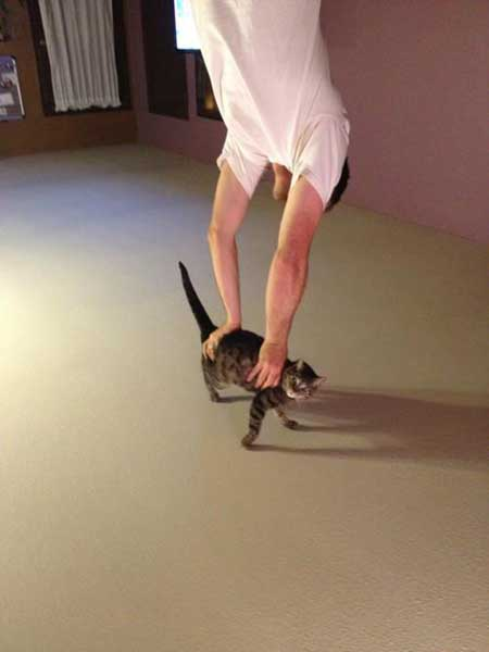 right-angle-cat-ceiling.jpg