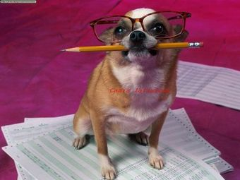 Funny_Dog_zpsba7e698e.jpg