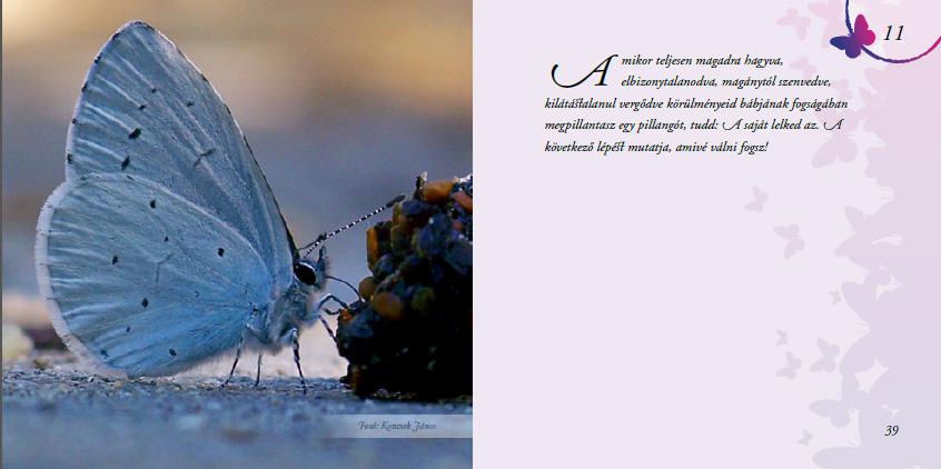idézetek ajándék könyvbe Megmutatom a belsejét és gyere el kedden megnézni!   Lélek Pillangó