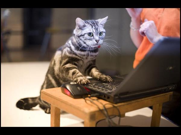catComputer.jpg