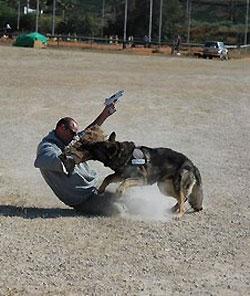 attackdog.jpg