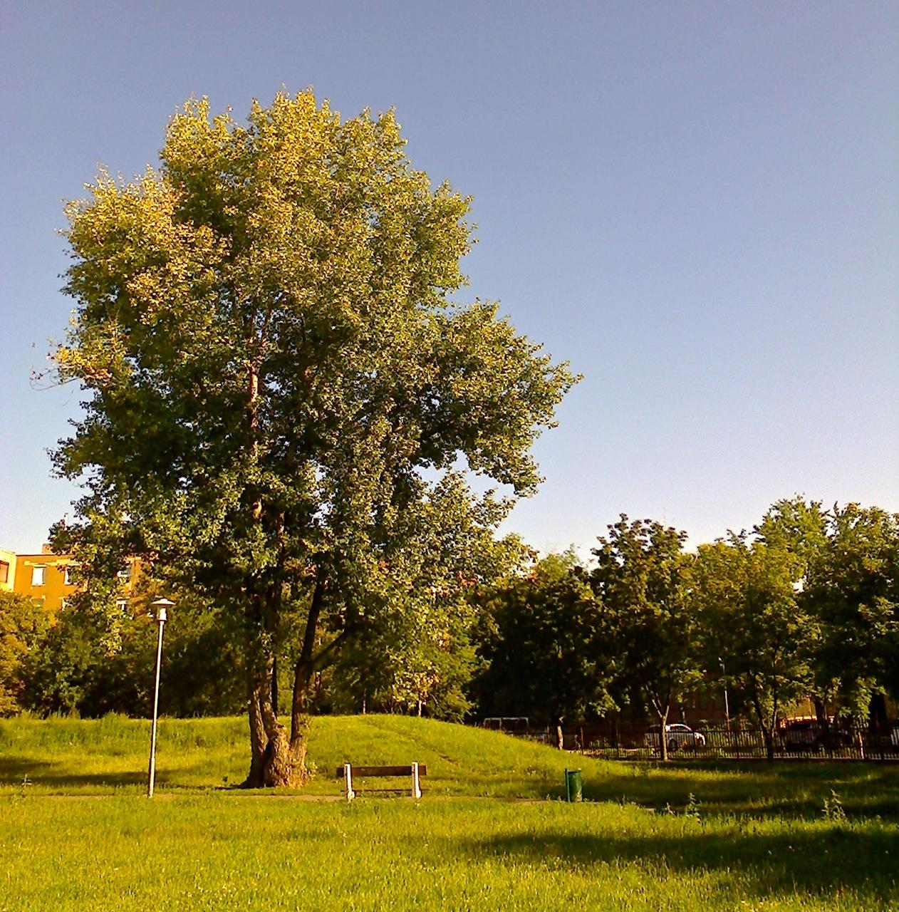 Lakótelep_park2.jpg